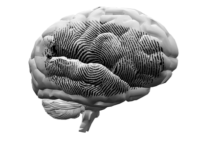 Finger Print on brain photo