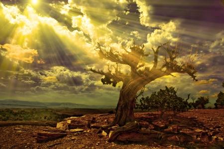 岩だらけの砂漠のシーンにライト ストリーム 写真素材