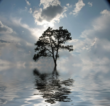 reflected: Water Tree Stock Photo