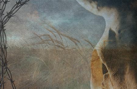 craneo de vaca: Alambre de p�as y campo de trigo marco cr�neo de vaca Foto de archivo