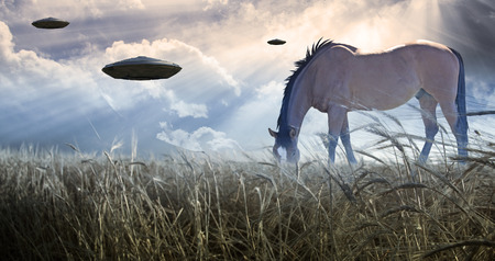 ufos: Horse grazing with UFOs floating nearby
