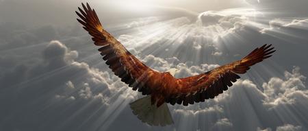 Adelaar in de vlucht boven de wolken tyhe