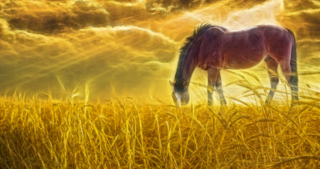 Horse grazing in sun drenched field photo