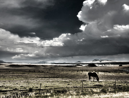 Horse grazing with thunderheads photo