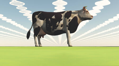 biologic: Geneticly modified cow
