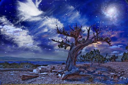 Desert Tree at night Stock Photo