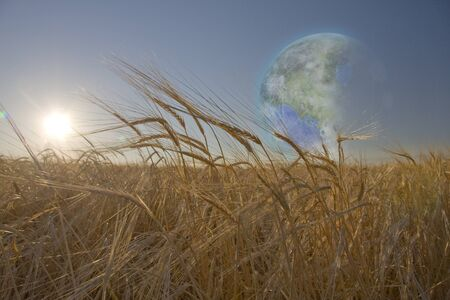 fields  grass: Terraformed Luna seen from field on earth
