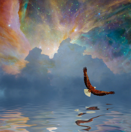 Eagle in flight over water with starry sky