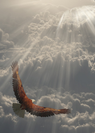 Eagle in flight about the clouds Stock Photo