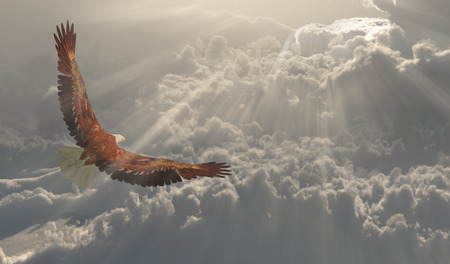 Eagle in flight about the clouds Stockfoto