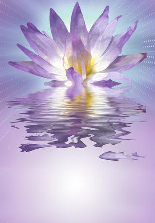 reflection: Lotus