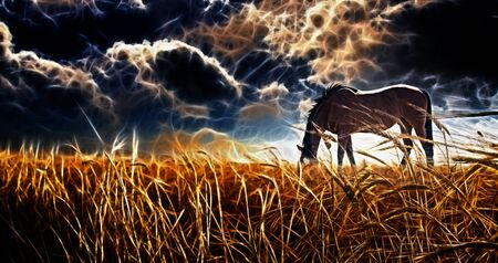 dark blue background: Abstracted Horse grazing in field with stormy sky