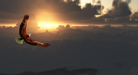 Eagle in Flight Above Dramatic Cloudscape 写真素材