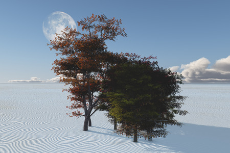 inexplicable: Inexplicable trees in desert