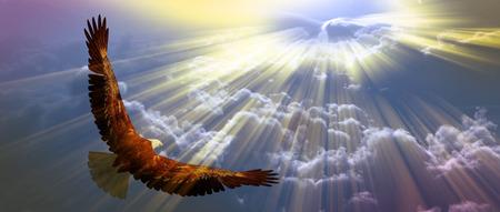 Adelaar tijdens de vlucht boven de wolken Stockfoto