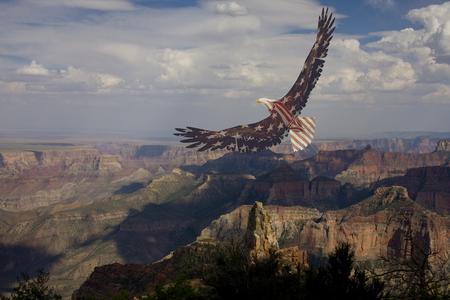 eagle canyon: USA Flag Eagle in the sky Stock Photo