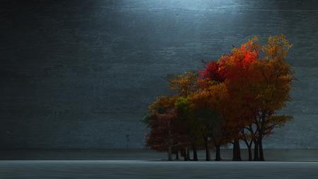 Autumnal Trees Stock Photo