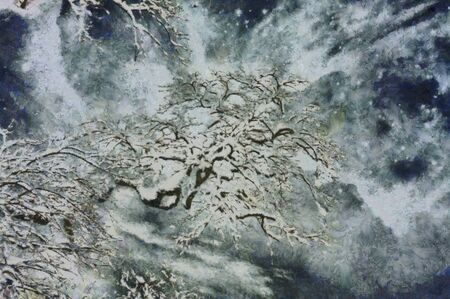 backgrounds texture: Snowy branch canvas