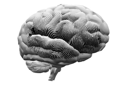 programmed: Finger Print on brain Stock Photo