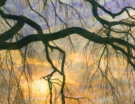tree branch: Tree branch. Sunset.