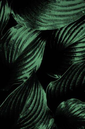 hyper: Green leaves Stock Photo