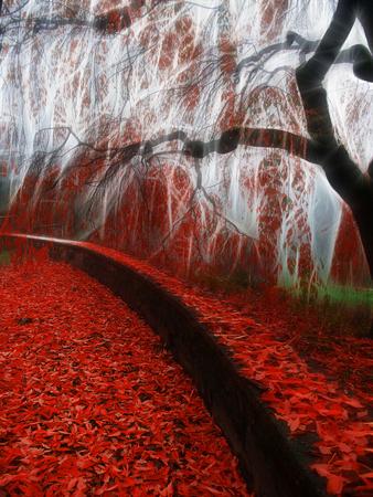 Impressionist autumn scene. Red leafs