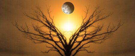 Mystic Tree of Life. Moon in The Sky. Sunset or Sunrise