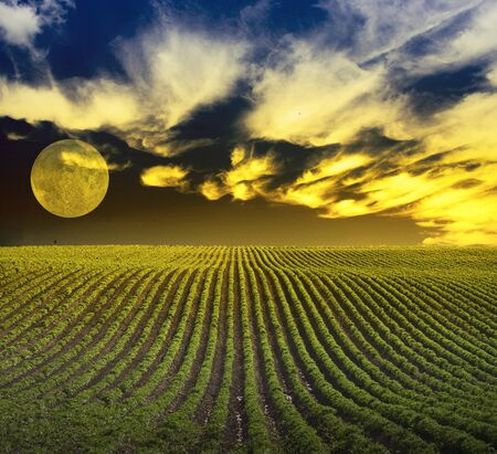 Green field and mystic yellow clouds. Full moon