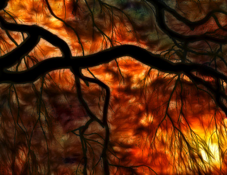 Weeping willow at sunset impression Stock Photo