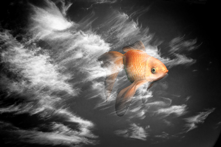 Surrealism. Goldfish in cloudy sky.