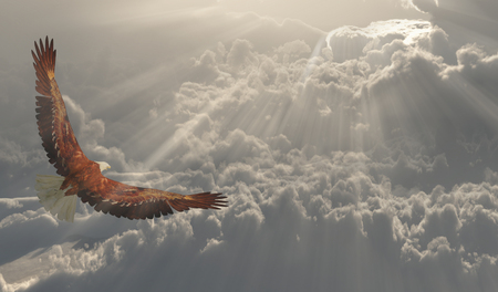 Freedom. Eagle in flight about the clouds