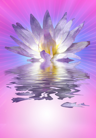 Lotus flower. Water lily on water surface