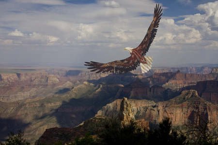 Eagle in USA national colors flies above canyon 写真素材