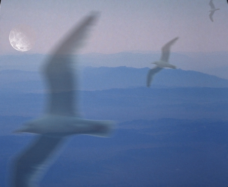 Full moon and seagulls flying Stock Photo
