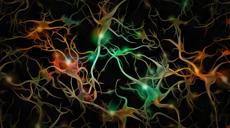 Colorful bright neurons of human brain