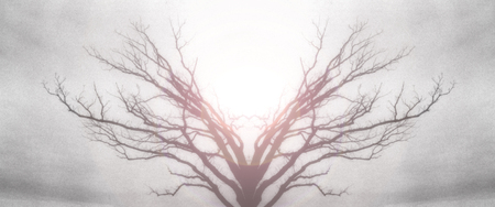 Mystic Tree of Life. Sun light