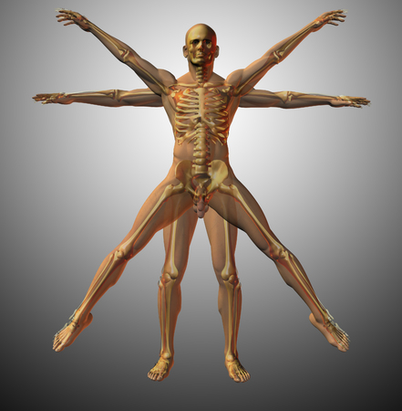 Anatomical vitruvian man. X-ray. 3D rendering