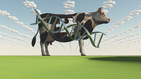 GMO Business. Cow and DNA strand Stock Photo
