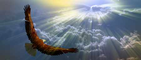 Eagle in flight above tyh clouds