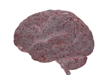 Human brain. 3D rendered model