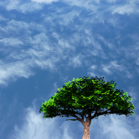 Green tree. Cloudy blue sky background