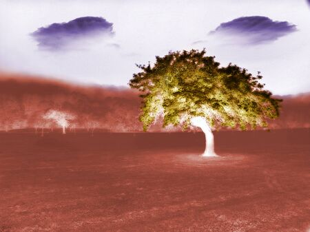 Surreal landscape. Tree souls Stock Photo