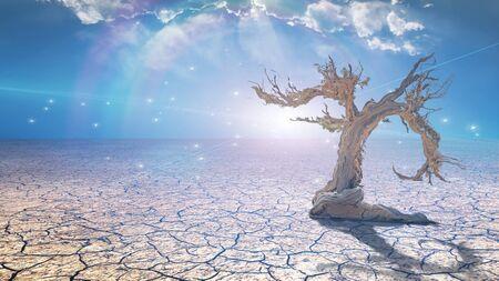 Delightful desert scene with light and old tree