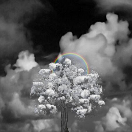 Cloud Tree and rainbow