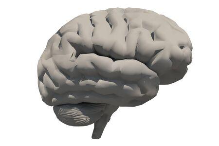 Human brain 3D model. 3D rendering