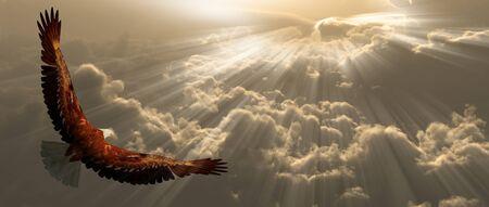 Aigle en vol au dessus des nuages
