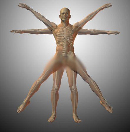 Vitruvian anatomy. Human model. 3D rendering