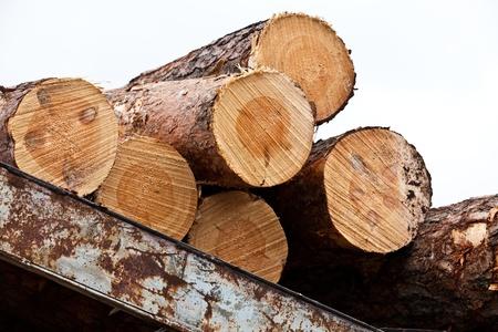 carpenter's sawdust: lumber mill
