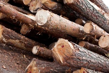carpenter's sawdust: wood Stock Photo