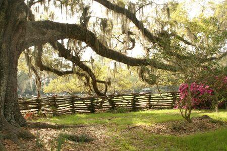 Zuidelijke Aanplantingen
